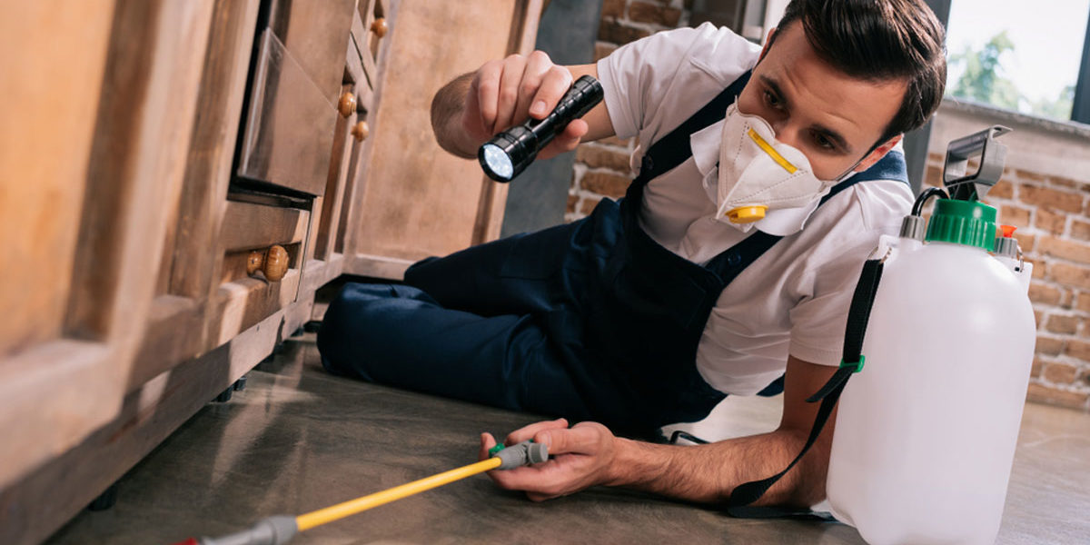 The Top 3 Benefits of Having a Yearly Pest Control Service
